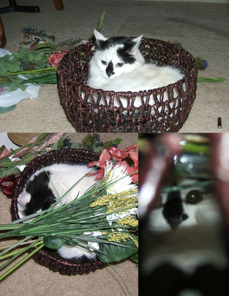 collage of cat in basket