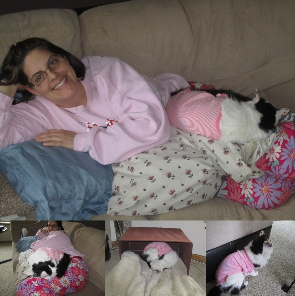 collage of cat wearing baby jumper