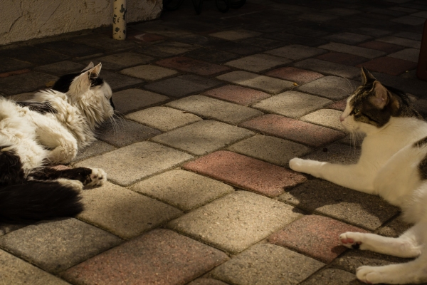 two cats lounging on brick patio